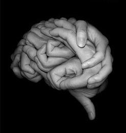 inteligencia-colectiva-foto